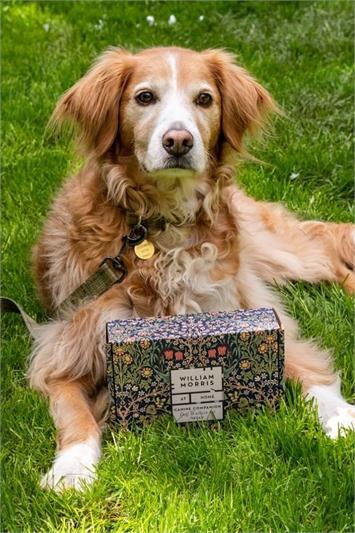 Khaki Heathcote & Ivory - Canine Companion Dog Walkers Kit, Image 1 of 6